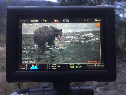 Taylor-Grizzlies-Sigma150-600mm-3